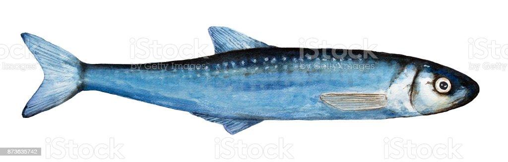 Acuarela solo eperlanos ilustración de pescado. Superior vista, colores azul, primer plano; cuerpo pequeño, fino, largo, todo. - ilustración de arte vectorial