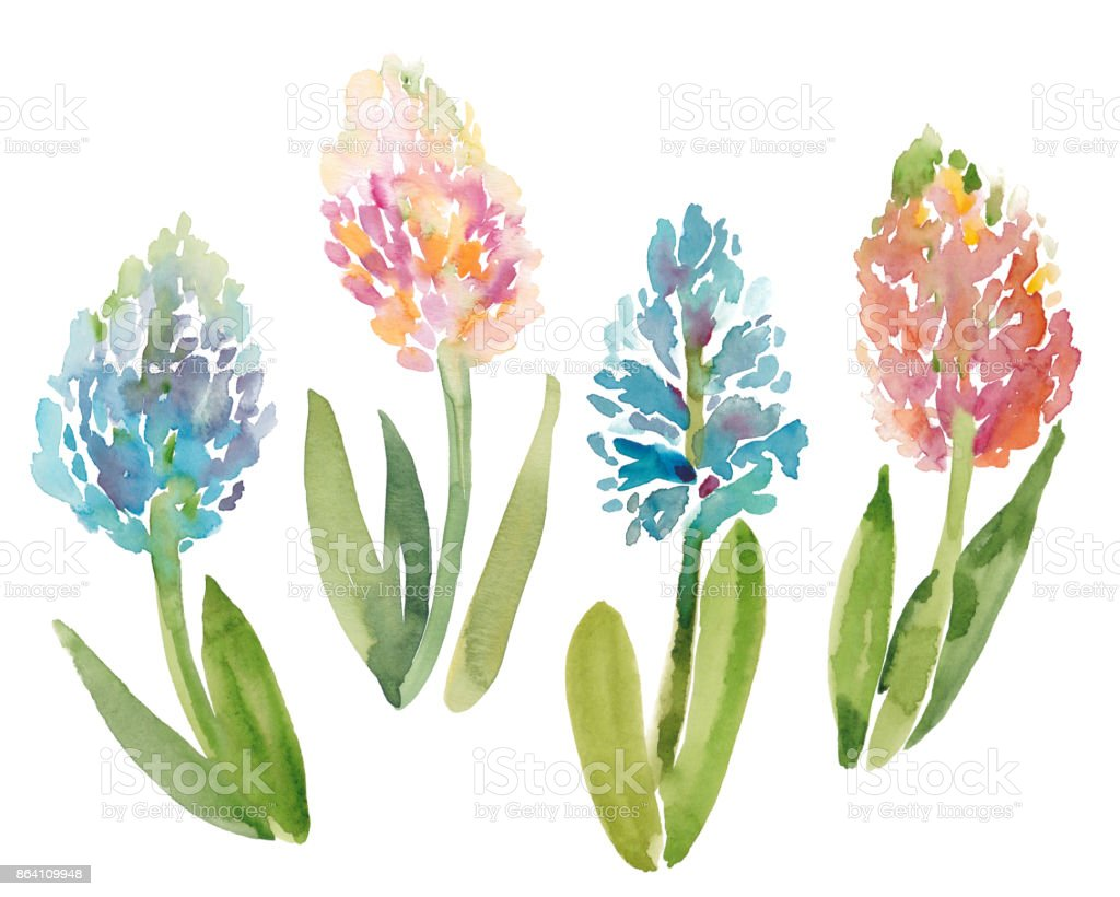 Watercolor sketch illustration of hyacinth flowers royalty-free watercolor sketch illustration of hyacinth flowers stock vector art & more images of backgrounds