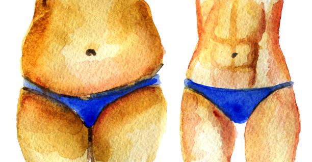 watercolor sketch of fat and slim torso on white background vector art illustration