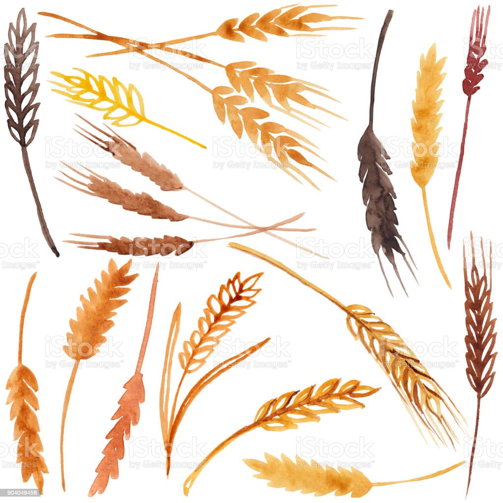Watercolor spikelets, raster vector art illustration