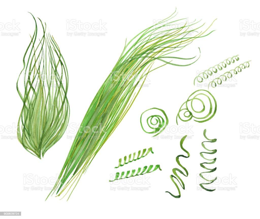 set de acuarela de la espirulina - ilustración de arte vectorial
