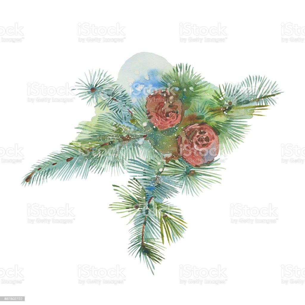 watercolor spruce branch vector art illustration