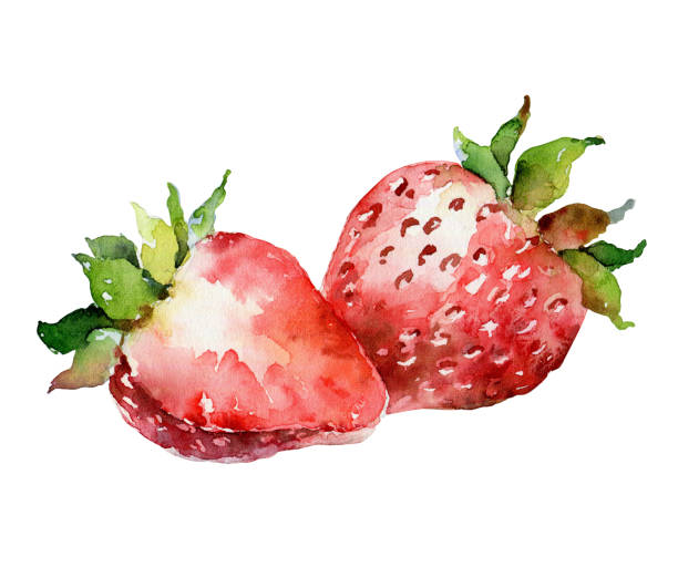 illustrazioni stock, clip art, cartoni animati e icone di tendenza di watercolor strawberry isolated on white background - mika