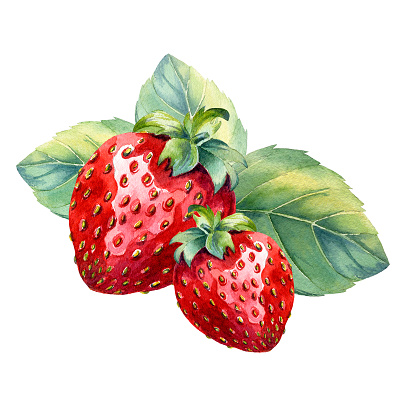 Watercolor strawberry on white background