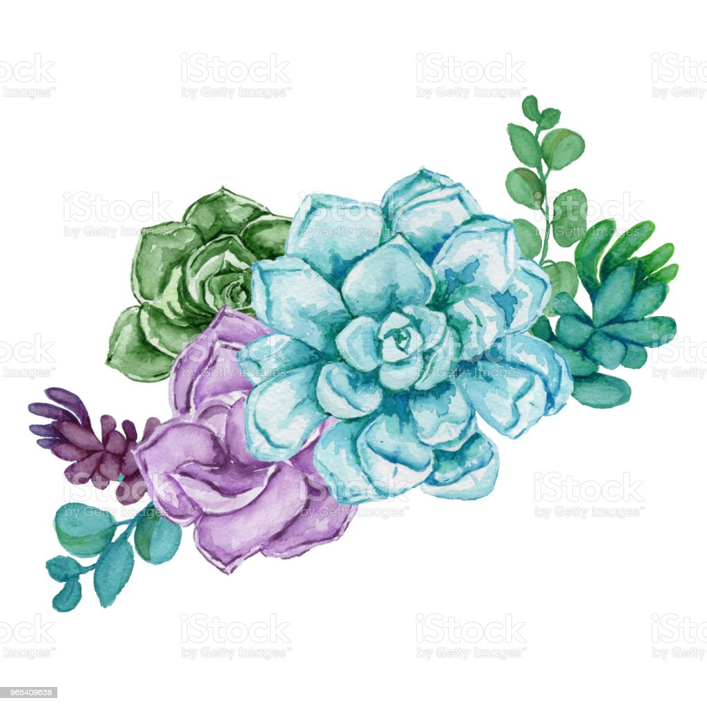 Watercolor succulent composition. watercolor succulent composition - stockowe grafiki wektorowe i więcej obrazów biały royalty-free
