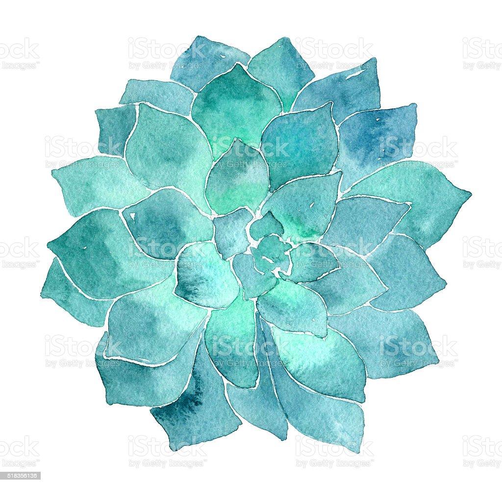 Aquarela Echeveria suculentos ilustração - ilustração de arte em vetor