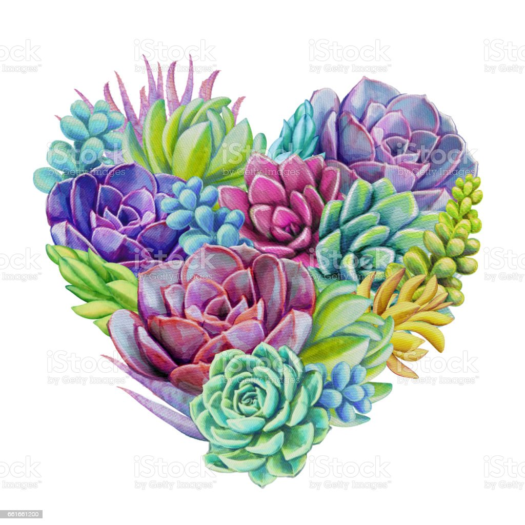watercolor succulent plants composition, floral bouquet illustration, isolated on white background vector art illustration