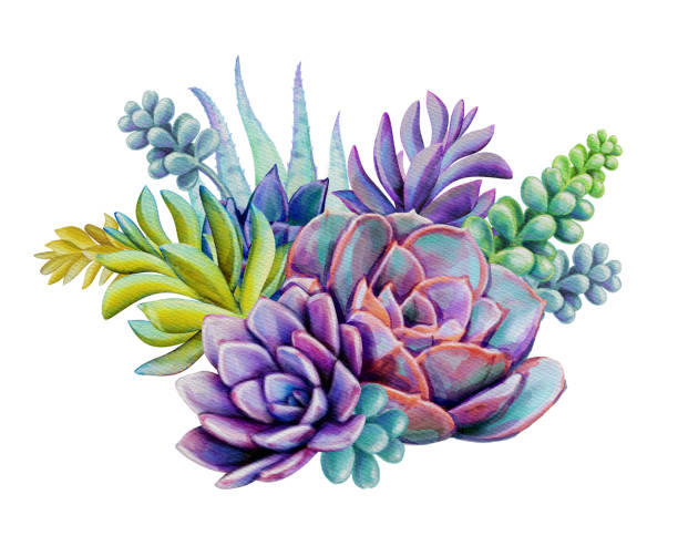 Best Succulent Plant Illustrations, Royalty-Free Vector