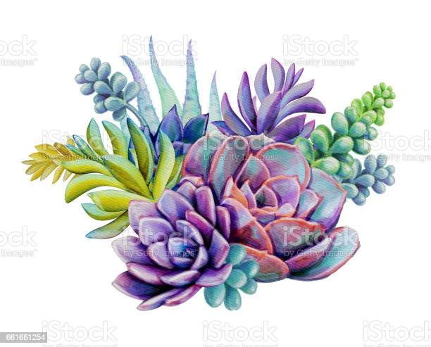watercolor succulent plants composition, floral bouquet illustration, isolated on white background