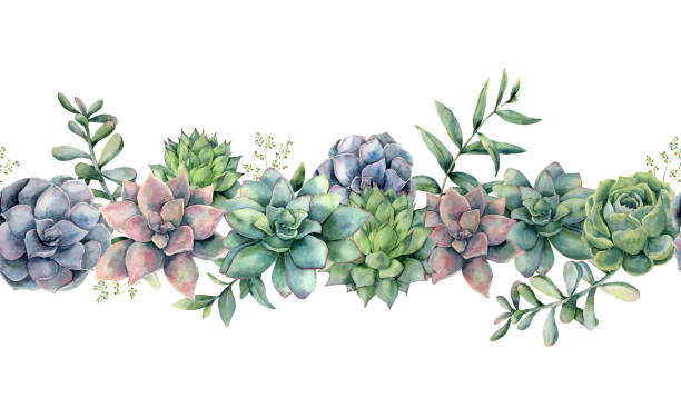 수채화 succulents 원활한 꽃다발입니다. 손으로 그린된 녹색, 보라색, 분홍색 선인장, 유 칼 리 나무 잎과 가지 흰색 배경에 고립.  디자인, 인쇄에 대 한 식물 그림입니다. 녹색 식물 - 즙이 많은 stock illustrations