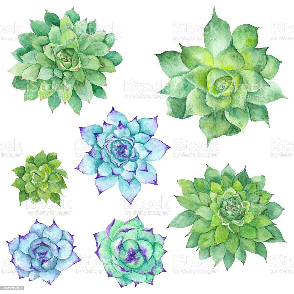 Watercolor Succulents Set vector art illustration