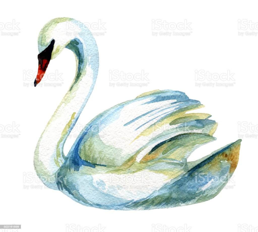 Watercolor swan. vector art illustration