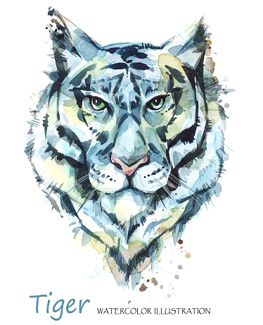 Watercolor tiger on the white background. African animal. Wildlife art illustration. Can be printed on T-shirts, bags, posters, invitations, cards, phone cases, pillows