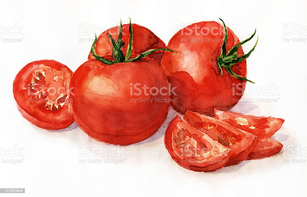 Watercolor tomatoes vector art illustration