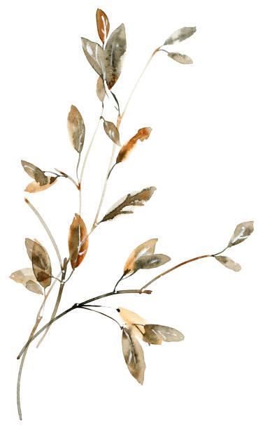 gałęzie drzewa akwarely - gałąź część rośliny stock illustrations