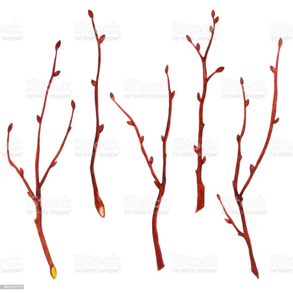 Watercolor tree branches vector art illustration
