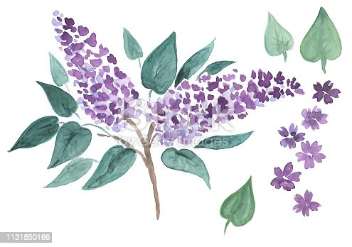 watercolor flowers, lilac, branch, watercolor, watercolor illustration, summer, flowering, bouquet, beauty, nature, holiday, gift, March 8, international women's day, spring, flowering, tree, purple, admiring