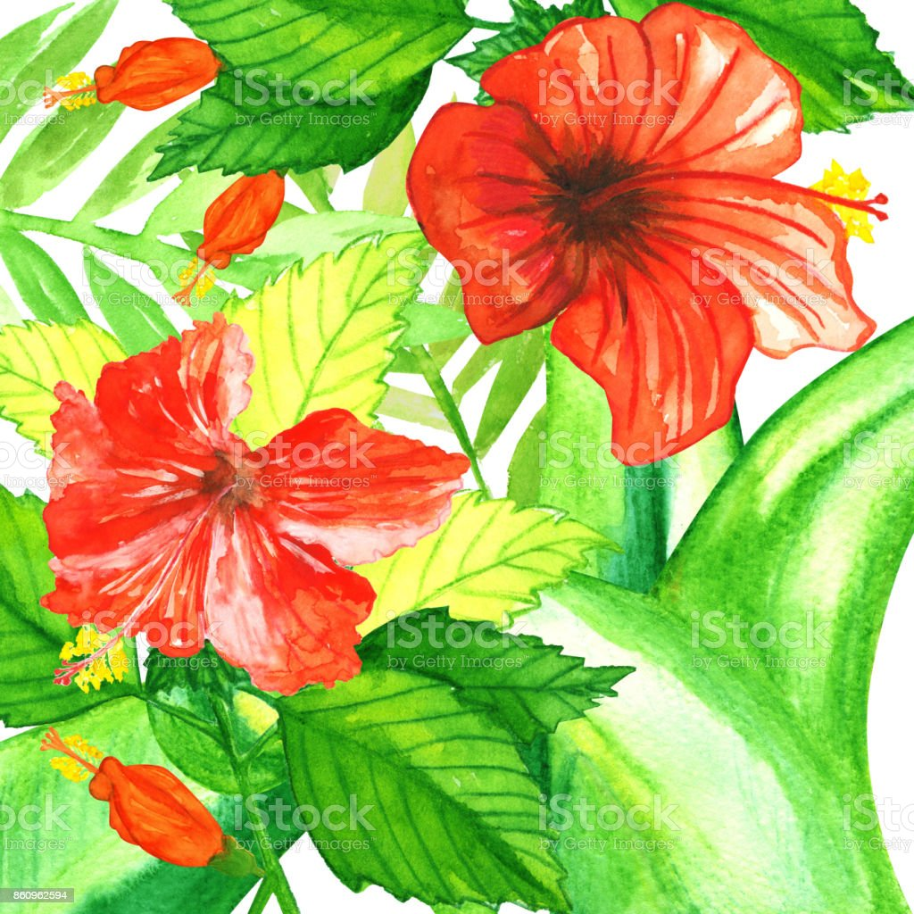 Watercolor Tropic Plants With Red Hibiscus Stock Vector Art & More ...