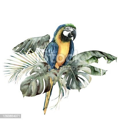Watercolor tropical card with parrot and palm leaves. Hand drawn banana, coconut and monstera leaves. Floral illustration isolated on white background for design, print or background. Summer template