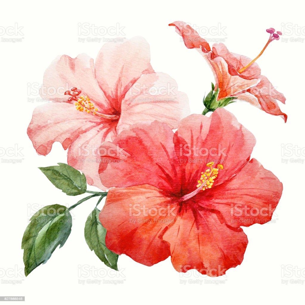 Watercolor tropical hibiscus flower stock vector art more images watercolor tropical hibiscus flower royalty free watercolor tropical hibiscus flower stock vector art amp izmirmasajfo