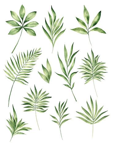 Watercolor tropical leaf set