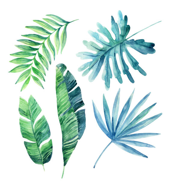 watercolor tropical leaves set - palm leaf stock illustrations, clip art, cartoons, & icons
