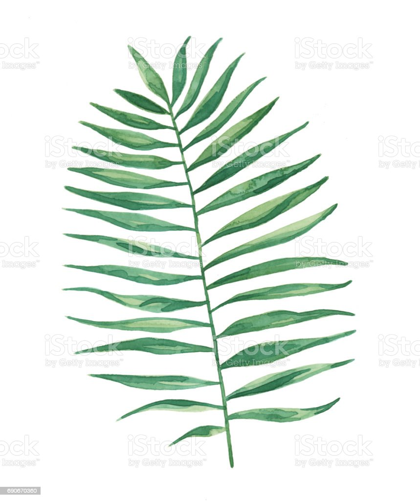 Suluboya Tropikal Palmiye Yaprak Yaprak Boyama Stok Vektor Sanati