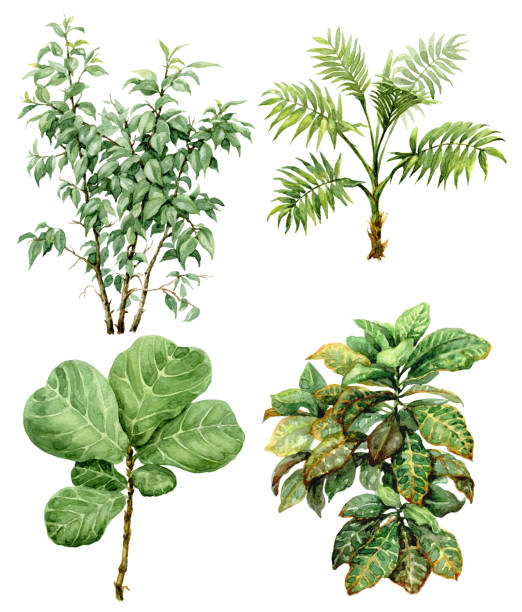 Watercolor tropical plants Hand drawn  branches and leaves of tropical plants. Watercolor set of exotic green bushes and small trees isolated on white background. amazon stock illustrations