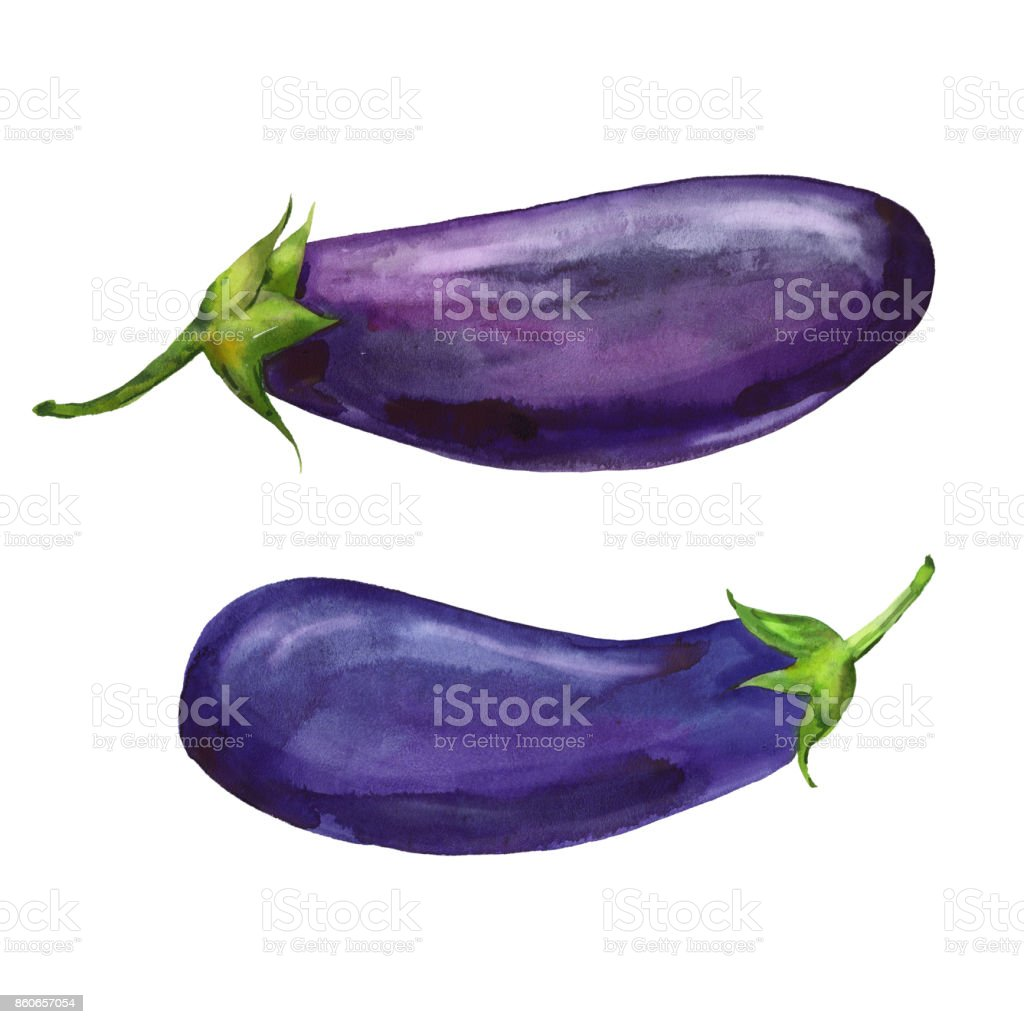 watercolor two eggplants vector art illustration