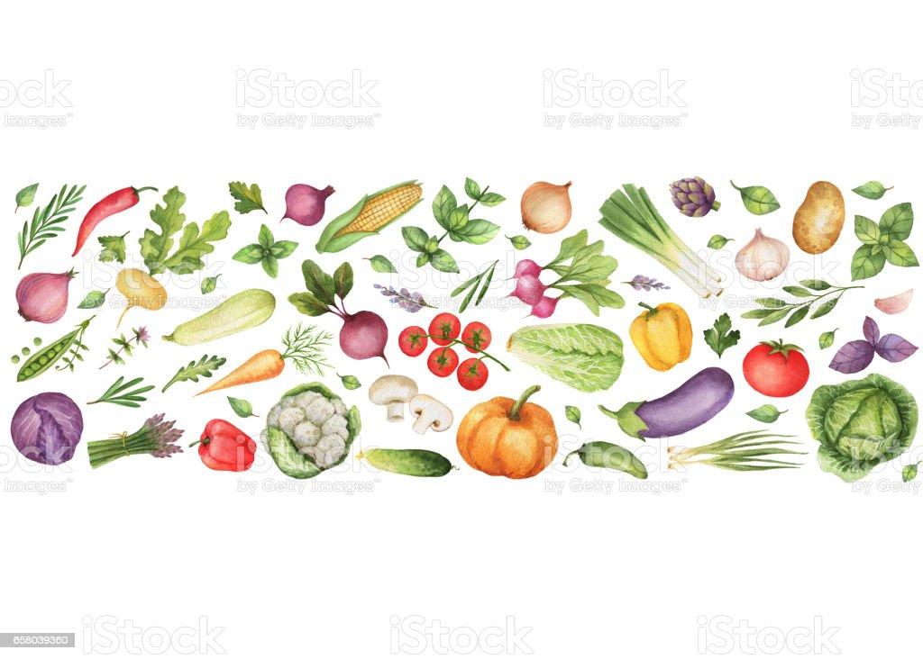 水彩野菜やハーブは、白い背景で隔離。 ベクターアートイラスト