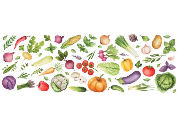 水彩野菜やハーブは、白い背景で隔離。 - 野菜点のイラスト素材/クリップアート素材/マンガ素材/アイコン素材