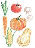 watercolor vegetables carrot pumpkin zucchini tomato corn mushrooms mushrooms