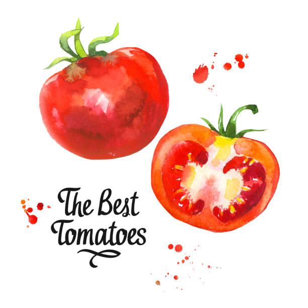 トマト イラスト素材 Istock