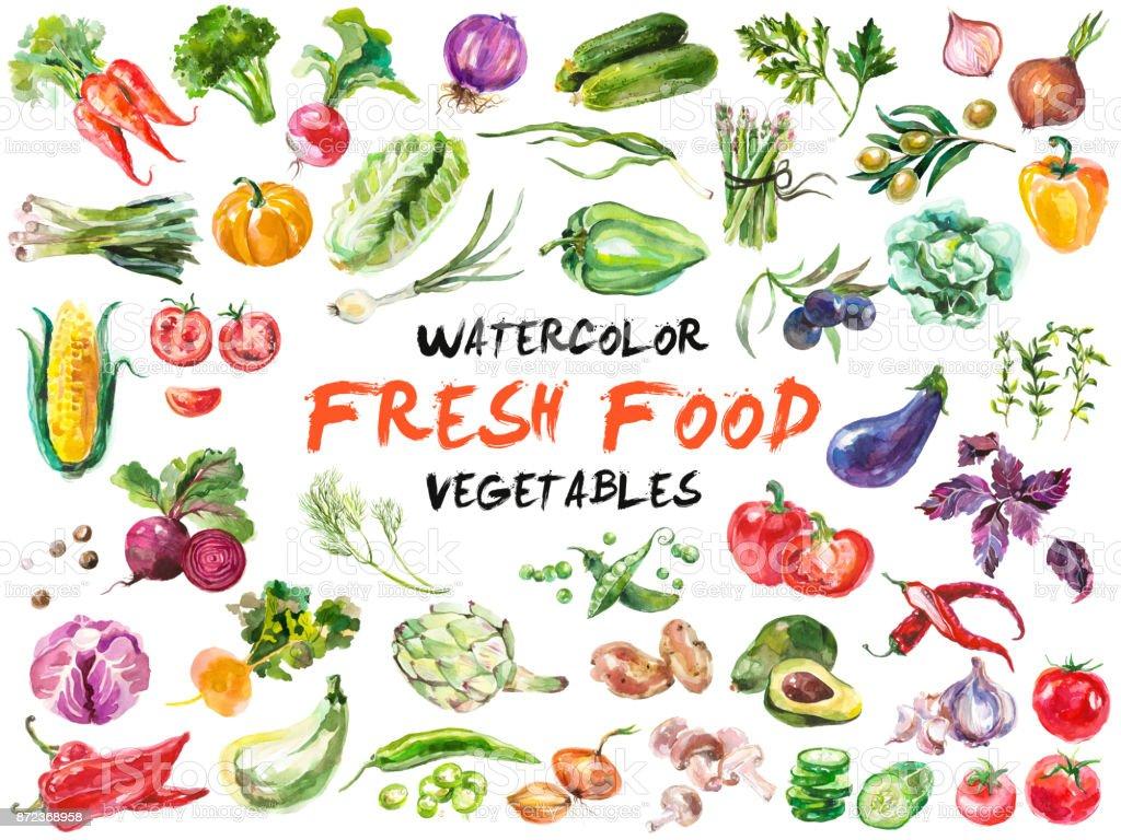 Acuarela verduras aislados en blanco - ilustración de arte vectorial
