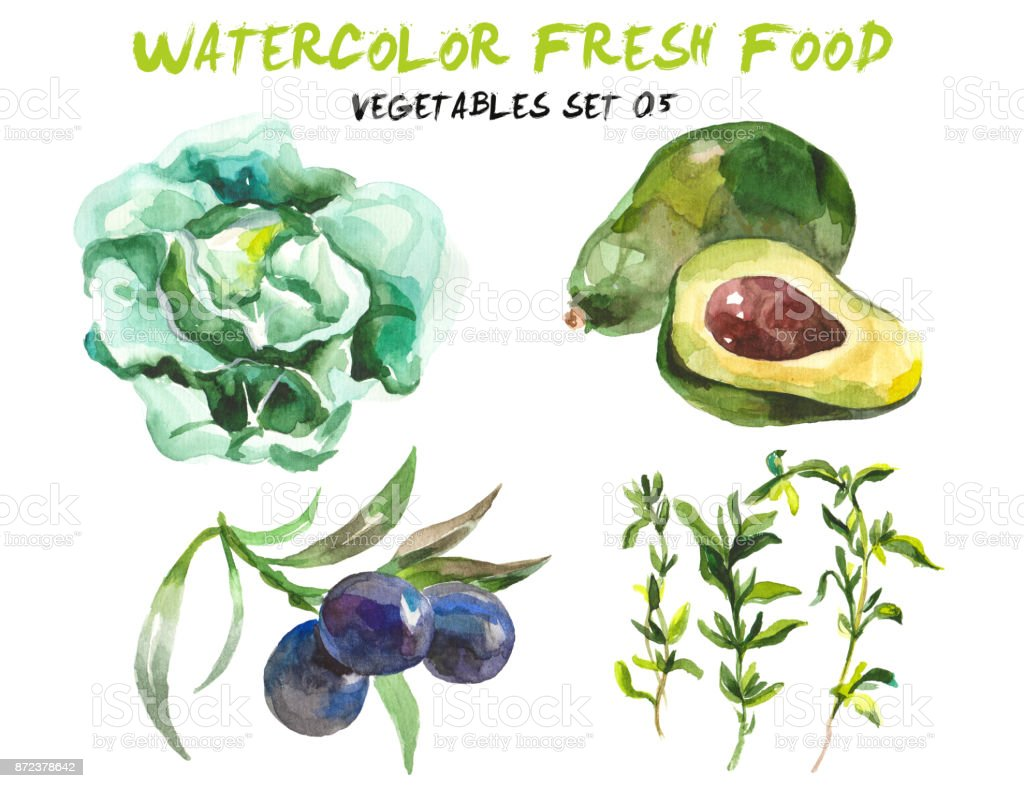 Watercolor vegetables isolated on white vector art illustration