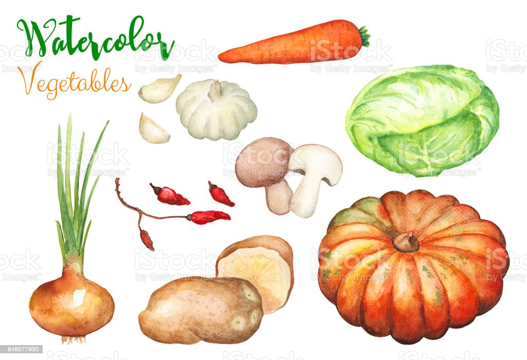 Verduras Acuarela sobre fondo blanco. Ilustración de handdrawn de cosecha otoñal. - ilustración de arte vectorial
