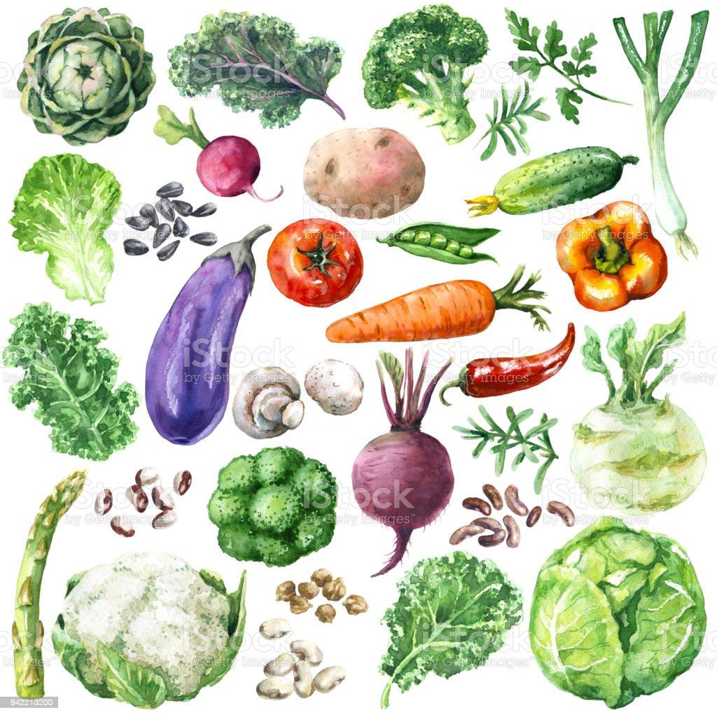 水彩の野菜セット ベクターアートイラスト