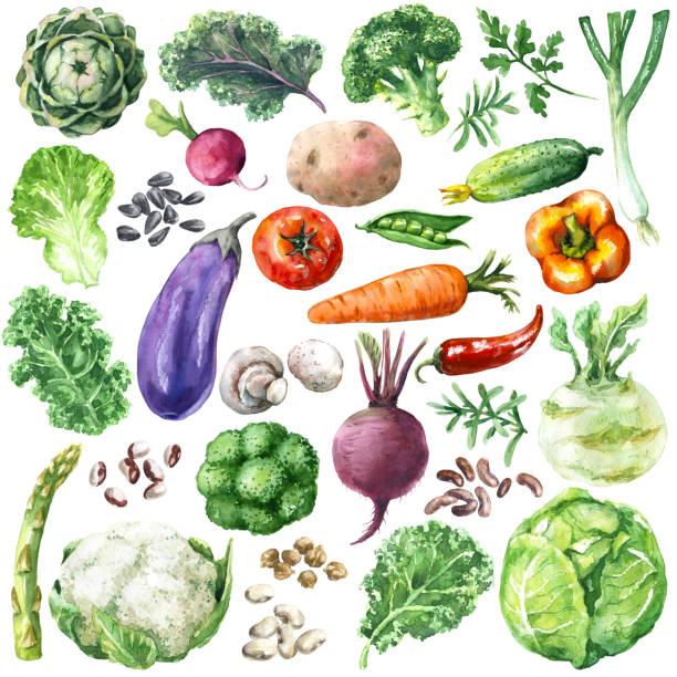 ilustraciones, imágenes clip art, dibujos animados e iconos de stock de set de acuarela verduras - vegetal