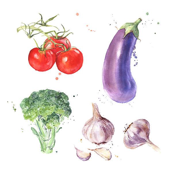 illustrazioni stock, clip art, cartoni animati e icone di tendenza di acquarello set di verdure fresche con pomodori, melanzane, melanzana, broccoli, aglio - melanzane