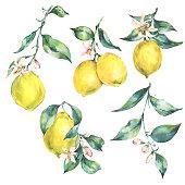 Mixed media illustration-lemon.