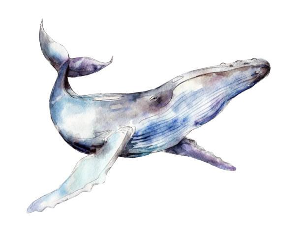 aquarell wal, handgezeichnete abbildung isoliert auf weißem hintergrund. - wal stock-grafiken, -clipart, -cartoons und -symbole