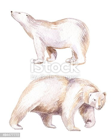 istock watercolor white bear isolated on white background 494477772