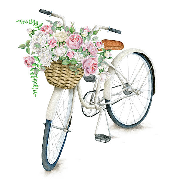 Watercolor White Bicycle With Beautiful Flower Basket isolated on white background vector art illustration