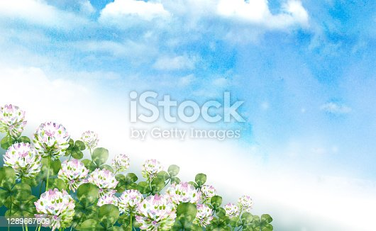 Watercolor white clover in the sky