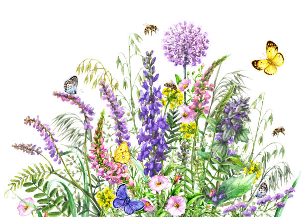 illustrazioni stock, clip art, cartoni animati e icone di tendenza di watercolor wild flowers and insects - impollinazione