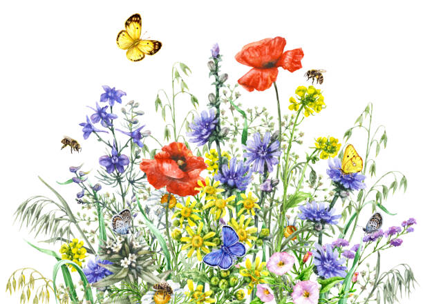 watercolor wild flowers and insects - wildflowers stock illustrations, clip art, cartoons, & icons