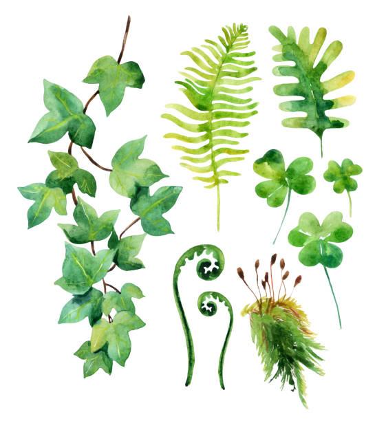 stockillustraties, clipart, cartoons en iconen met watercolor wild leaves set isolated on white background. - klimop