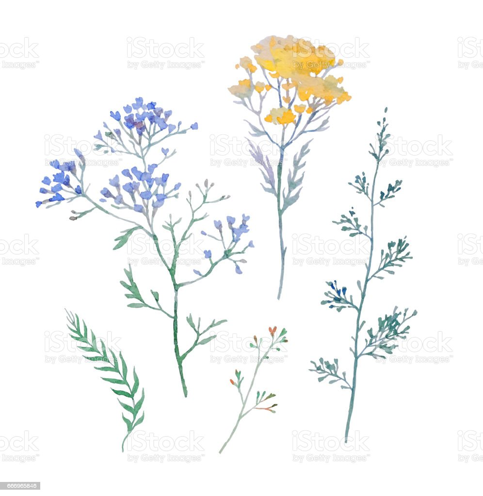 Watercolor wildflowers vector art illustration