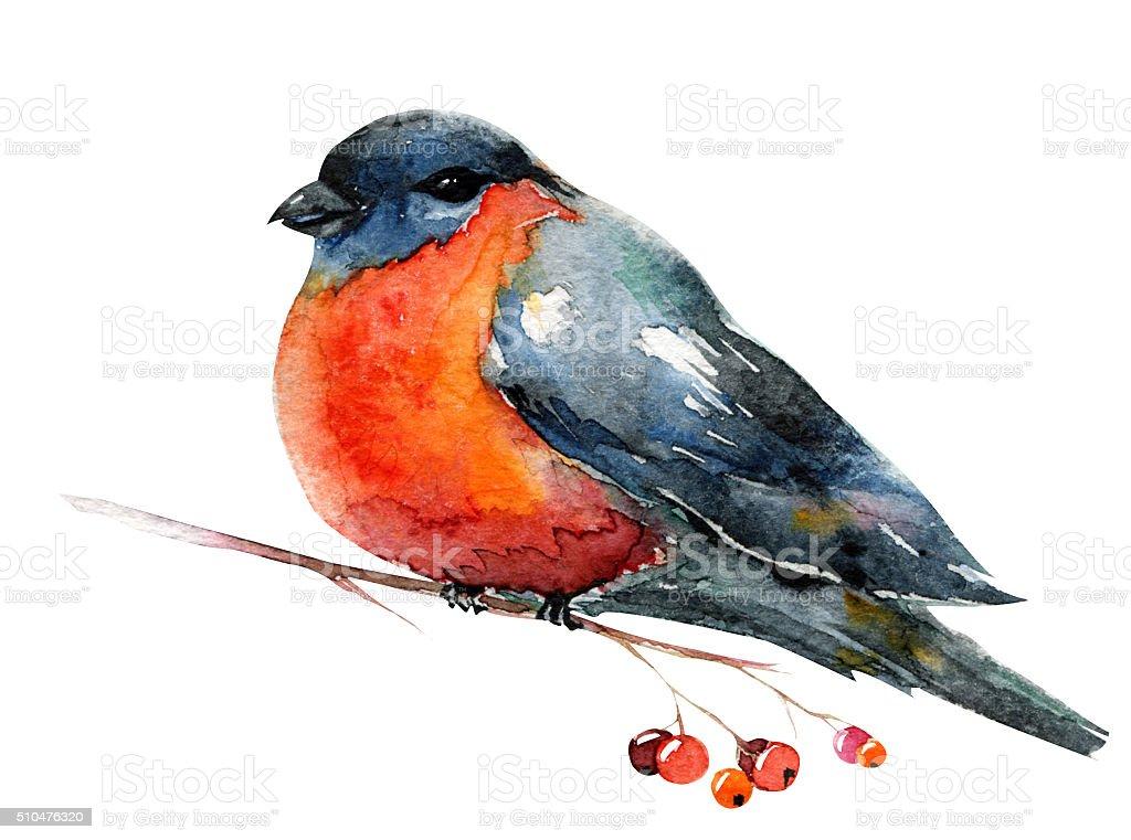 Akwarela Z Czerwony Ptak Gil Zwyczajny Zimą Stockowe Grafiki