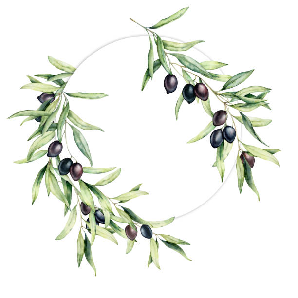 illustrazioni stock, clip art, cartoni animati e icone di tendenza di watercolor wreath with olive leaves and berries. hand painted floral circle border with olive fruit and tree branches with leaves isolated on white background. for design, print and fabric. - verde cachi